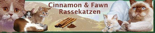 Cinnamon and Fawn Rassekatzen